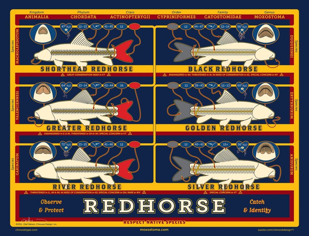 Redhorse illustration showing traits of six species of redhorse