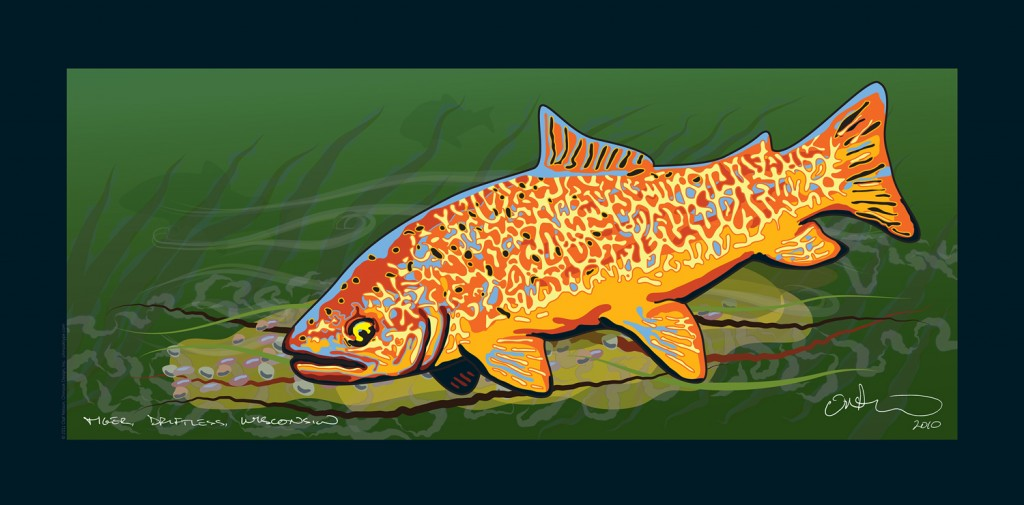 Tiger Trout illustration by Olaf Nelson