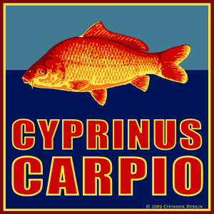 Common carp illustration in yellow, red and blue