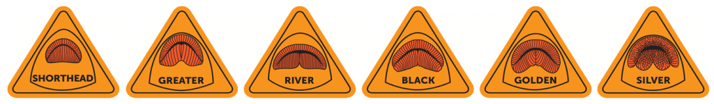 Triangular stickers showing the lips of 6 species of redhorse
