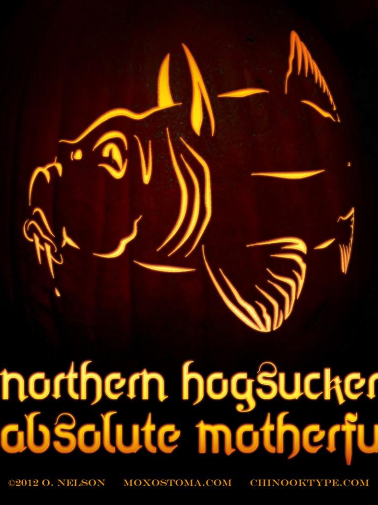 Halloween Hogsucker