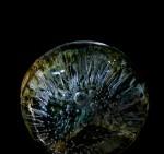 Ice disk on deer vertebra, March 2013