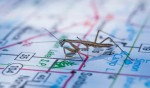 Newly emerged/hatched mantis on Minnesota. 6/18/2013