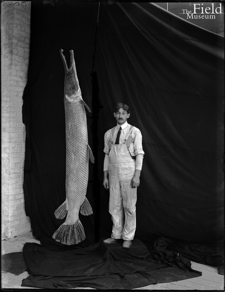 FieldMuseum preparator Richard Radatz, pictured in 1905 with alligator gar