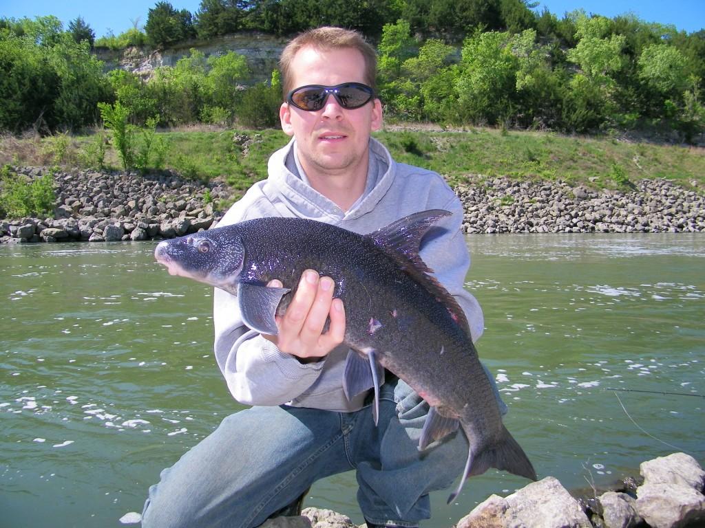Paul Schumann with a Blue Sucker from Republican River, Kansas (April 2012). Photo by Paul Schumann. See http://www.roughfish.com/content/thousand-miles-blue-sucker for details.