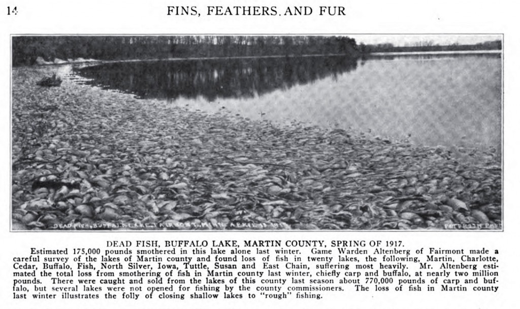 Dead Fish, Buffalo Lake, Martin County, MN, Spring of 1917