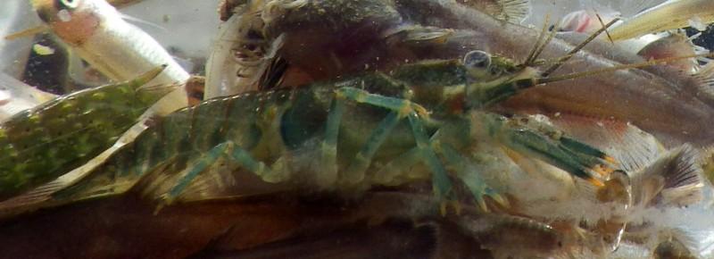 crayfish-7272-e1445622089877.jpg